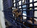 الأسير خلوف يتنفس نسائم الحرية بعد ستة شهور في سجون الاحتلال