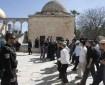 387 مستوطنًا اقتحموا الأقصى تحت حراسة قوات الاحتلال