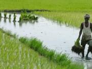 انتحار 12 ألف مزارع هندي خلال 3 سنوات لسبب غريب