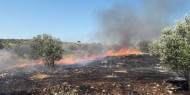 النيران تلتهم 20 شجرة زيتون في ضاحية صباح الخير بجنين