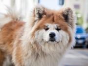 دراسة: وجود الكلاب قرب الأطفال يحفزهم على الدراسة