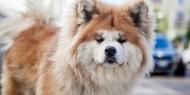 بيع أغلى كلب رعي في مزاد علني بـ37 ألف دولار أمريكي