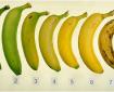 """حسب النوع واللون.. تعرف على فوائد """"الموز"""""""