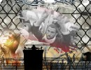 صحف الجزائر تلقي الضوء على أحوال الأسرى الفلسطينيين في سجون الاحتلال