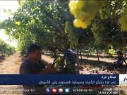 عنب غزة يشكو الكساد وسيطرة المستورد على الأسواق
