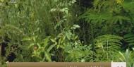 زراعة الزيتون في مدينة خانيونس