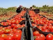 """""""الزراعة"""" تكشف حقيقة وقف استيراد 9 سلع من إسرائيل"""