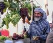 افتتاح مهرجان العنب في حلحول