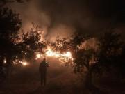 حرائق تقضي على 1200 شجرة زيتون في جنين