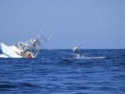 غرق سفينة تحمل 30 طن سمك في البحر الأسود