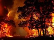 الحرائق تلتهم غابات أستراليا