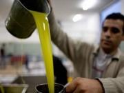 غزة تحقق الاكتفاء الذاتي في إنتاج زيت الزيتون