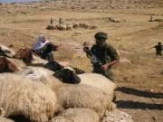 نابلس: مستوطنون يلاحقون رعاة أغنام في خربة يانون