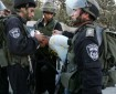 الاحتلال يعتقل فتى من قلقيلية