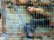 شرطة الاحتلال تعتقل طفلاً مقدسيًا من بلدة سلوان