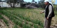 مزارعو غزة.. 5 أعوام من التجريف وإتلاف المحاصيل