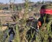 إعلام عبري: المقاومة تصعد الوضع في الضفة بعيدا عن غزة