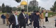 صور   عصابات المستوطنين تقتحم باحات المسجد الأقصى