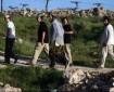 مستوطنون يقطعون الأشجار  في بلدة الخضر جنوب بيت لحم