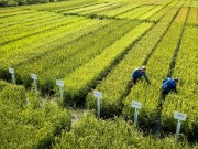 العراق: نمتلك 190 ألف طن من مخزون الأرز لبرنامج توزيع المواد الغذائية