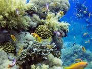 الأردن يدشن أول محمية بحرية بالتزامن مع الاحتفال بيوم البيئة العالمي