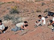 العثور على بقايا ديناصور ضخم تعود إلى 90 مليون عام