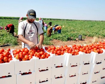الزراعة: السلة الغذائية في غزة تقترب من حافة الهاوية