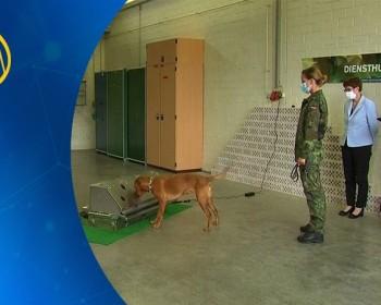 خاص بالفيديو|| الجيش الألماني يطلق برنامجا لتدريب الكلاب على اكتشاف مصابي كورونا من رائحة العرق