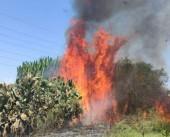 شاهد|| اندلاع حريق بمزرعة أفوكادو في ناحال عوز بفعل بالون حارق