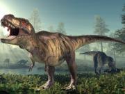 أكتشاف آثار لأقدام ديناصورات عاشبة في مدينة البيرة