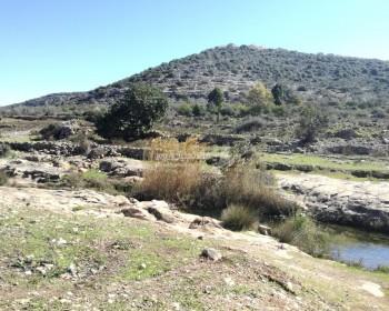 وادي قانا.. محمية طبيعية تعاني من انتهاكات الاحتلال ومستوطنيه المتواصلة