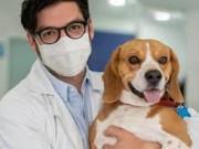 """دراسة كندية: مصابو """"كورونا"""" قد ينقلون العدوى إلى الكلاب"""