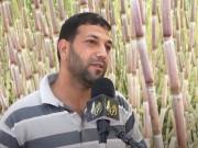 خاص بالفيديو|| مزارع فلسطيني يزرع قصب السكر بدلا من أشجار الزيتون