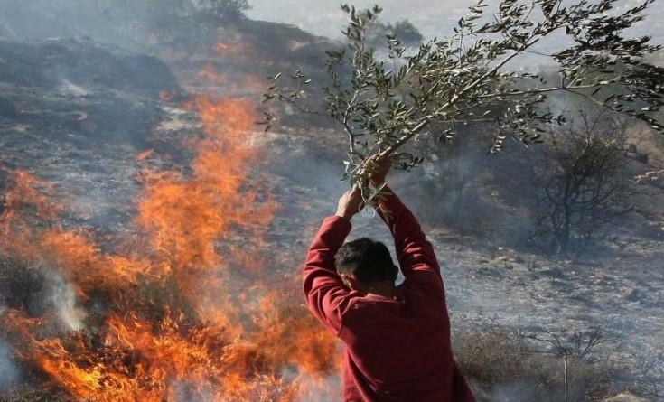 أوتشا: إحراق ألف شجرة زيتون بـ19 اعتداء للمستوطنين بالضفة خلال أسبوعين