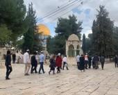 شرطة الاحتلال تجبر مقدسية على إخلاء مسار اقتحامات المستوطنين قرب باب الرحمة