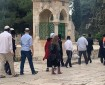 69 مستوطنا يقتحمون باحات المسجد الأقصى المبارك