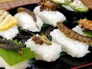 """""""الحشرات"""" ضمن قوائم الأطعمة الأوروبية قريبا"""