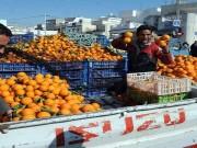 البرتقال التونسي يواجه صعوبات التصدير في ظل زيادة الإنتاج