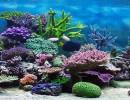 روبوت يحاكي قنديل البحر بحركته عبر الماء للكشف عن الشعاب المرجانية
