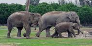 أقمار اصطناعية لحماية الفيلة من الصيد