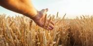 مؤسسة الحبوب السعودية تستورد 355 ألف طن من القمح