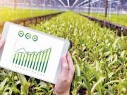 ترتيب الدول العربية على مؤشر الأمن الغذائي لـ 2020