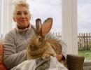 لصوص يسرقون أضخم أرنب في العالم ومكافأة لمن يعيده