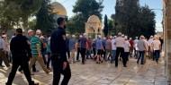 آلاف المستوطنين يتحضرون لاقتحام المسجد الأقصى يوم 28 من رمضان