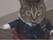 اليابان: تعيين قطة لمنصب رئيسة قسم شرطة