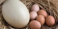 شركة تجميل تنتج كريمات للتجاعيد من بيض النعام
