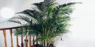 نباتات خطيرة لا تحتفظ بها في منزلك