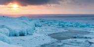 حيوان يعود للحياة في جليد سيبيريا