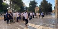 خاص بالفيديو والصور    تواصل الإدانات المحلية والعربية للاعتداءات الإسرائيلية على المسجد الأقصى