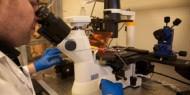 بريطانيا: اكتشاف سلالة جديدة من فيروس كورونا